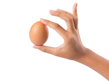 Young Girl Hand Holding Chicken Eggs