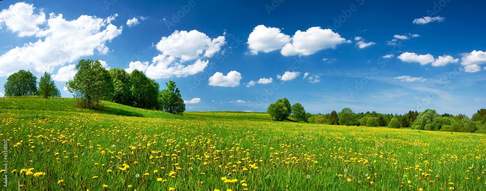 Fototapeta Field with dandelions and blue sky
