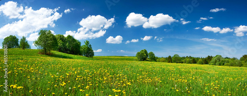 Tuinposter Cultuur Field with dandelions and blue sky