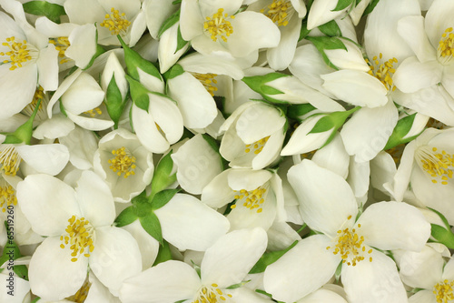 White jasmine flowers abstract background Wallpaper Mural