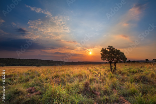 Magical sunset in Africa with a lone tree on a hill and louds