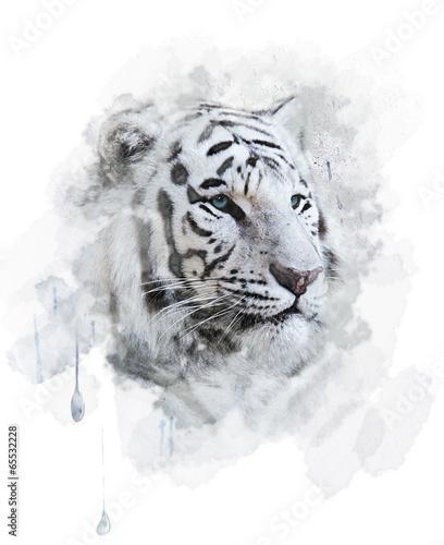 bialy-tygrys