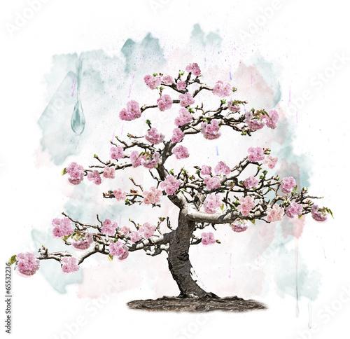 rozowe-kwitnace-drzewo