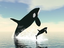 Killer Whale Mum And Baby - 3D...