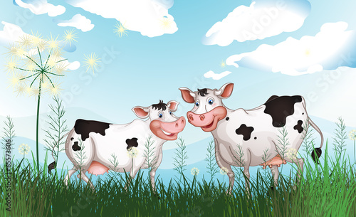 Two cows at the grassland