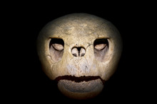 Close Up Of A Turtle Skull Isolated On Black Background.