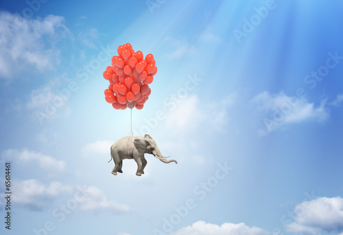 Elephant with balloons - fototapety na wymiar