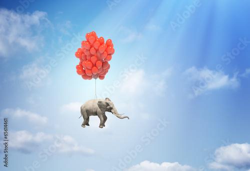 Fotografia  Elephant with balloons