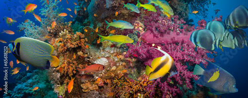 Coral and fish - 65618212