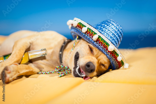Fotografija  drunk mexican dog