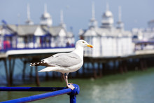 Seagull At Eastbourne Pier