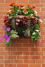 Hanging Basket With Bedding Plants