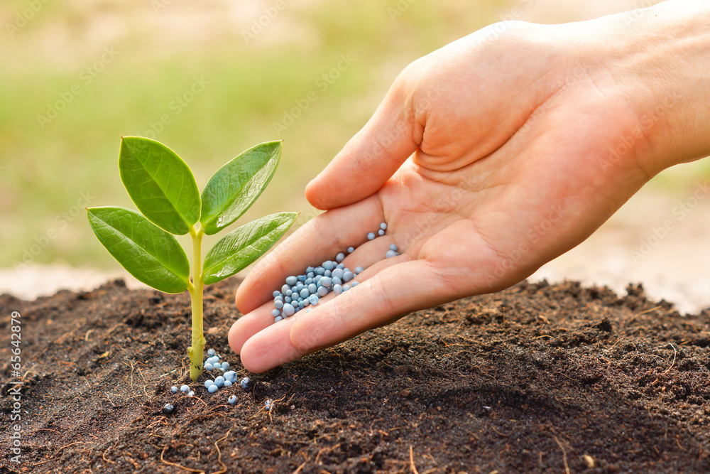 Fototapety, obrazy: a hand giving fertilizer to a young plant / planting tree