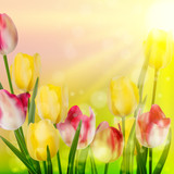 Beautiful spring flowers. EPS 10