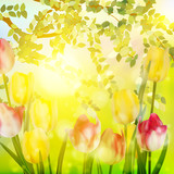 Fresh blooming tulips in the spring garden. EPS 10