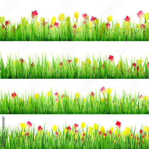 Staande foto Lente Grass And Flower Set, Isolated On White. EPS 10