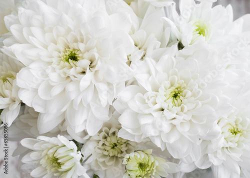 White Chrysanthemum #65655086