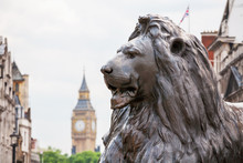 Lion In Trafalgar Square. Lond...
