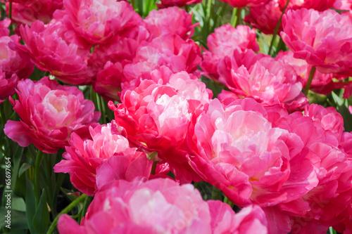 Papiers peints Rose Flowers garden in nature park