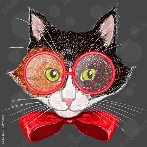 kot-w-czerwonych-okularach