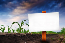 Blank Sign In Corn Agricultura...