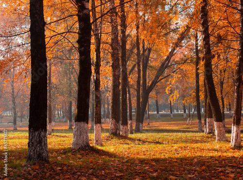 Fototapeta autumn park obraz na płótnie