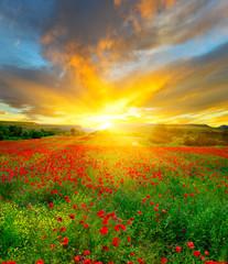 Fototapeta Очарование цветочных полей