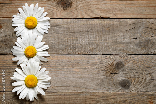 Deurstickers Madeliefjes Daisy flowers on wooden background