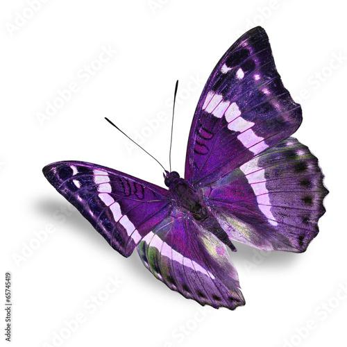 Fotografie, Obraz  purple butterfly