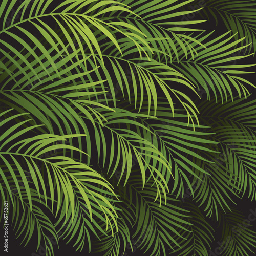 Wall Murals Tropical leaves background