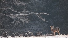 White-tailed Deer And Wild Tur...