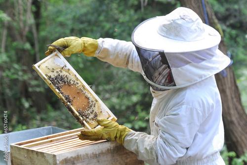 apiculteur Wallpaper Mural
