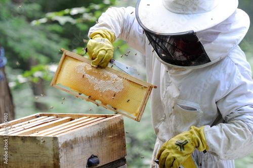 apiculteur Canvas Print
