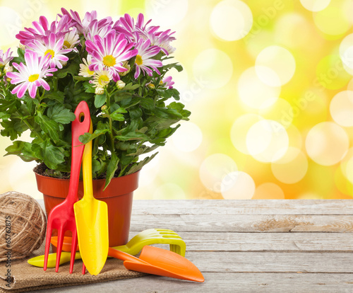 Fototapety, obrazy: Potted flower and garden tools