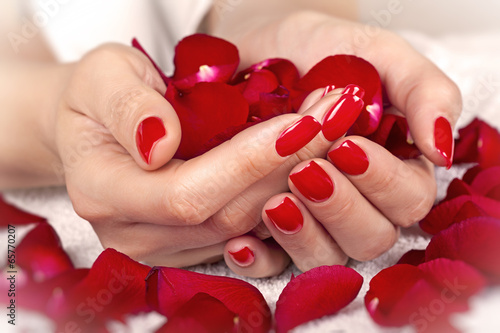 Red manicure on a woman hands with leafs of roses. Tableau sur Toile