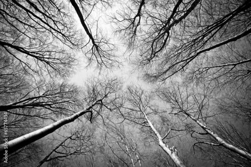 czarno-biala-korona-drzew