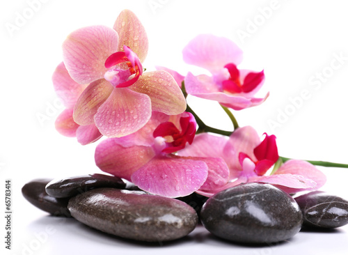 Aluminium Prints Spa Composition with beautiful blooming orchid with water drops and