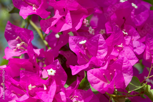 Leinwand Poster Pink blooming flower.