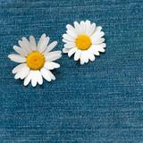 Zwei Margeriten auf Jeansstoff, endlich Sommer, Blüten