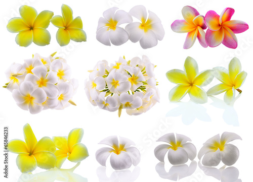 Wall Murals Plumeria Tropical flowers frangipani (plumeria) isolated on white backgro