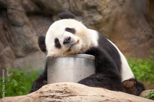 Schlafender Panda Canvas Print
