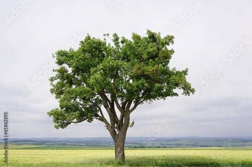 Fotografia Landschaft mit altem Birnbaum in Lothringen