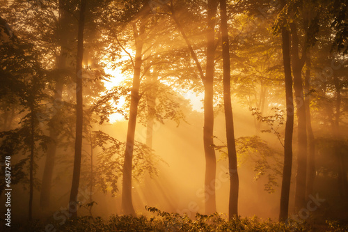 Sunlit forest in the morning