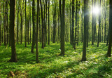 Drzewa w lesie przy wschodzie słońca