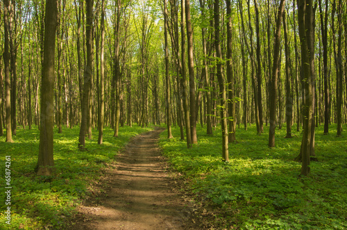 Garden Poster Road in forest Path in spring green forest