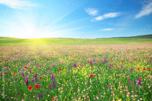Spring meadow of flowers