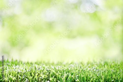 Tuinposter Natuur 背景 発芽した新芽