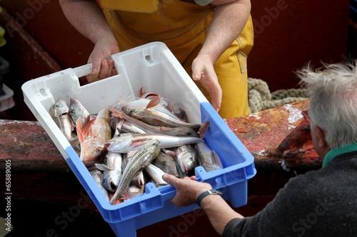 Fotografie, Obraz  arrivage de poissons au port de pêche,bretagne