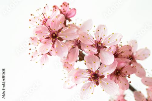 kwitnienie-galezi-drzewa