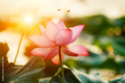 Deurstickers Lotusbloem lotus flower blossom